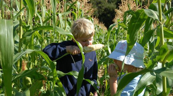kids_eating_corn