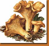 mushroomhike