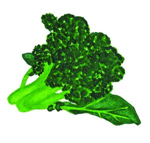 DD logo broccoli