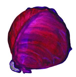 DD logo cabbage
