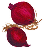 DD logo red onion