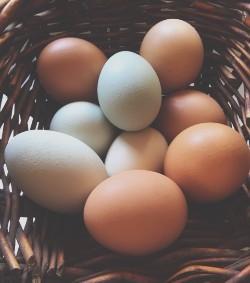 2016-11 Eggs