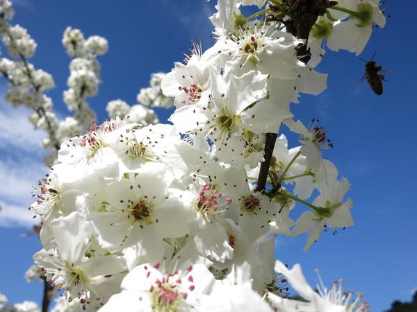 white flowers_la