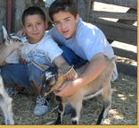 res_kid_goats_la