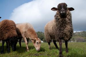 3-11_sheep_pasture_sky_b_dq_29 (2)
